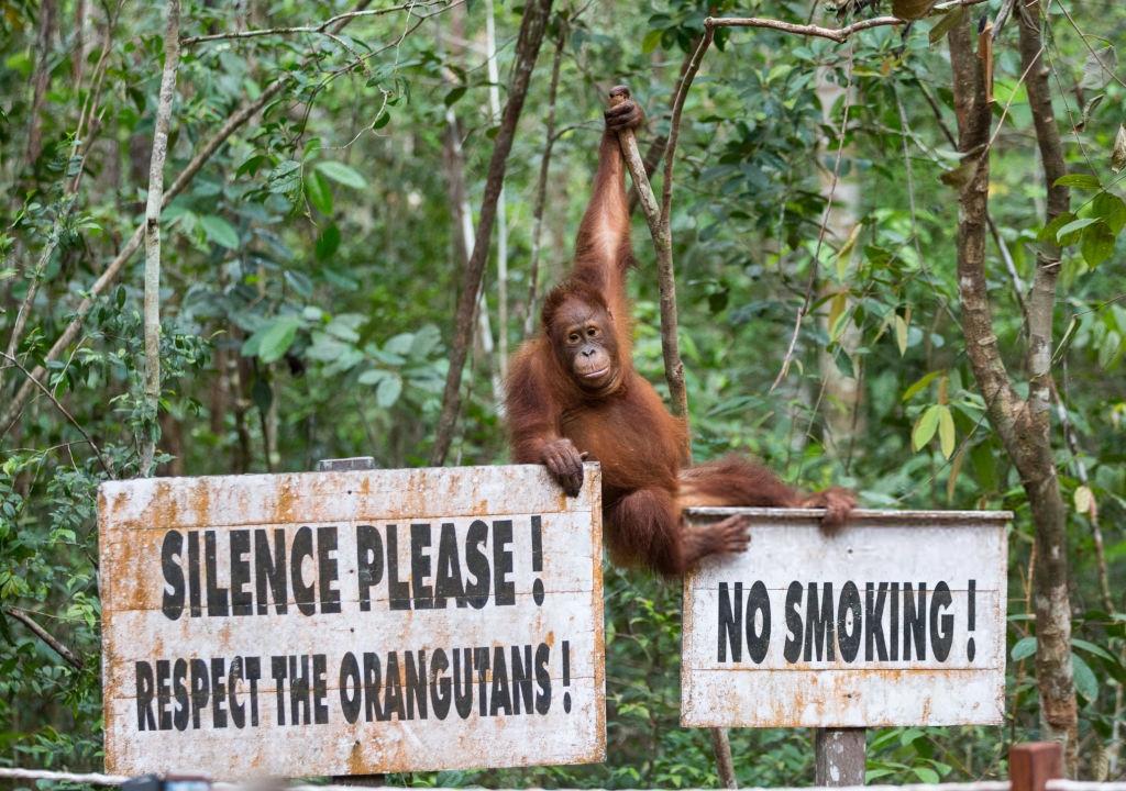 Referensi Tempat Wisata di Indonesia | Orangutan Camp Leakey Taman Nasional Tanjung Puting