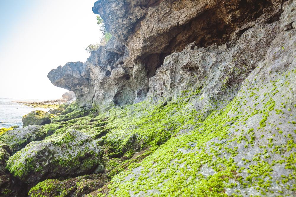 Referensi Tempat Wisata Pantai di Bali: Tebing Hijau di Pantai Green Bowl Ungasan Bali