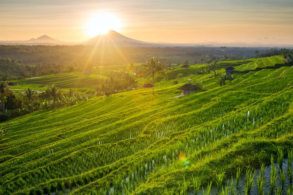 Tempat Prewedding di Jatiluwih Tabanan Bali