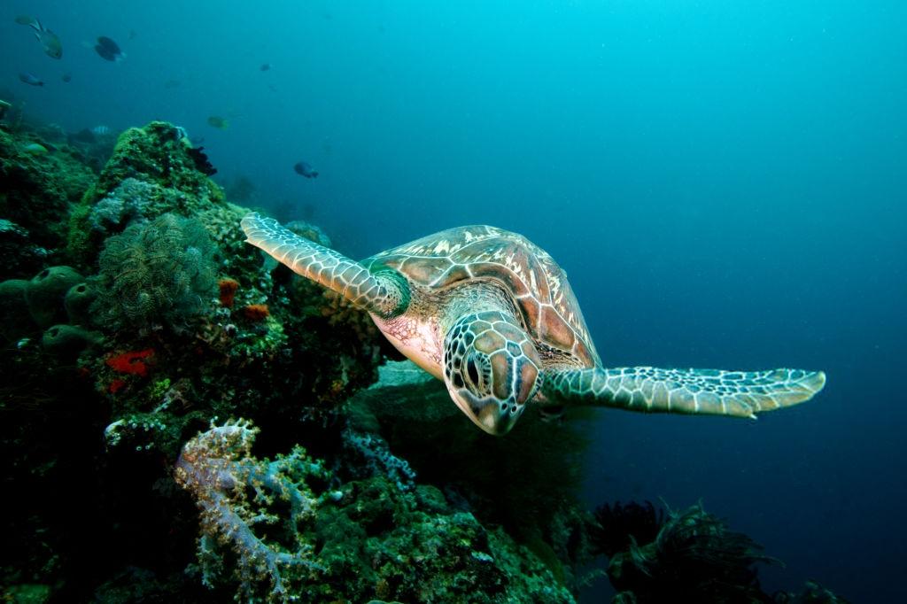 Referensi Tempat Wisata di Indonesia | Tempat Snorkeling di Pulau Menjangan Bali