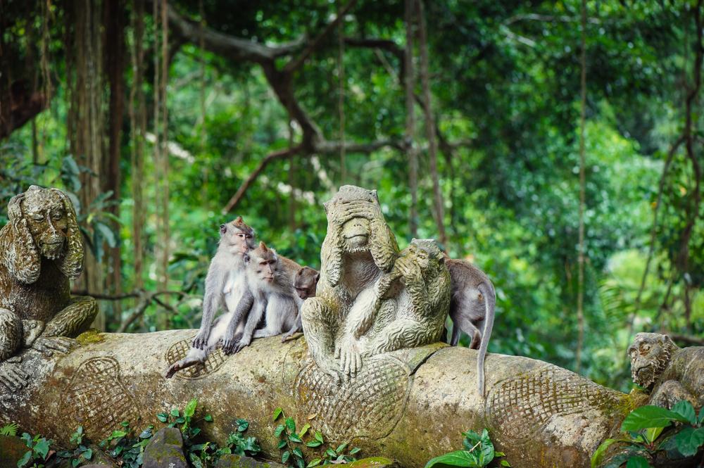 Menyaksikan monyet liar di hutan Ubud