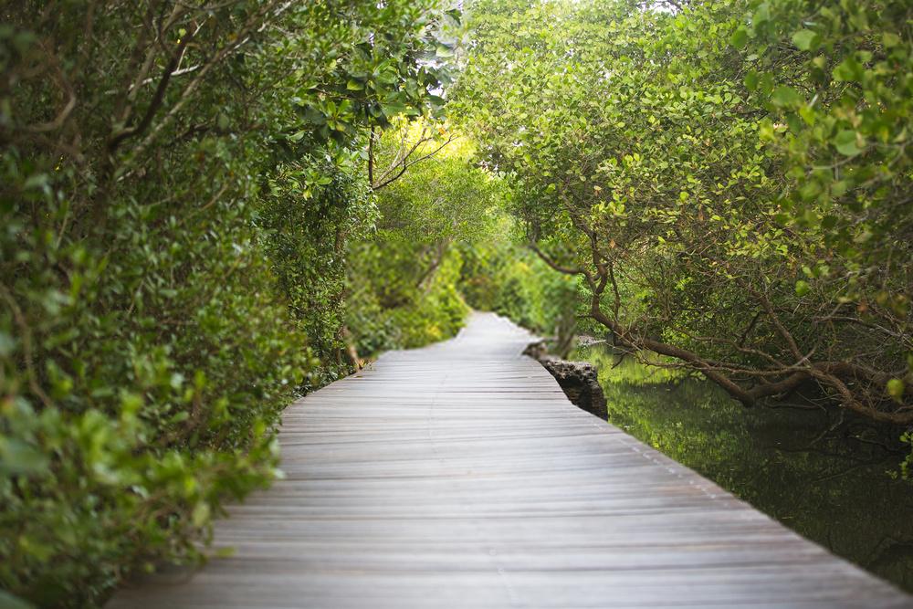 Objek Wisata Mangrove Bali